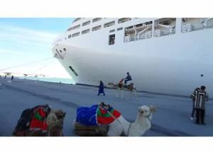 camels on Tunisian port