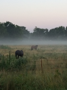Horse Pasture near Wellsville on my morning run 7-9-14
